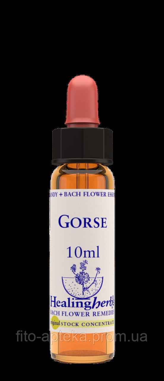 Цветы Баха. GORSE - Утесник (№ 13) Healing Herbs