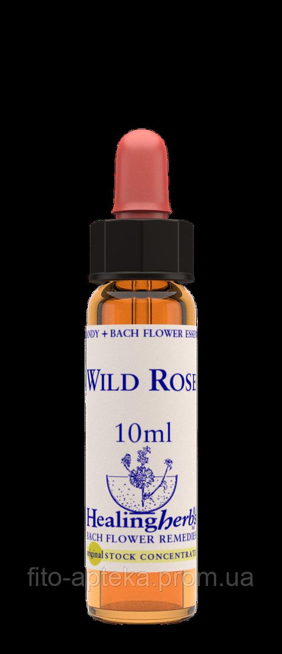 Цветы Баха. WILD ROSE - Шиповник (№ 37) Healing Herbs