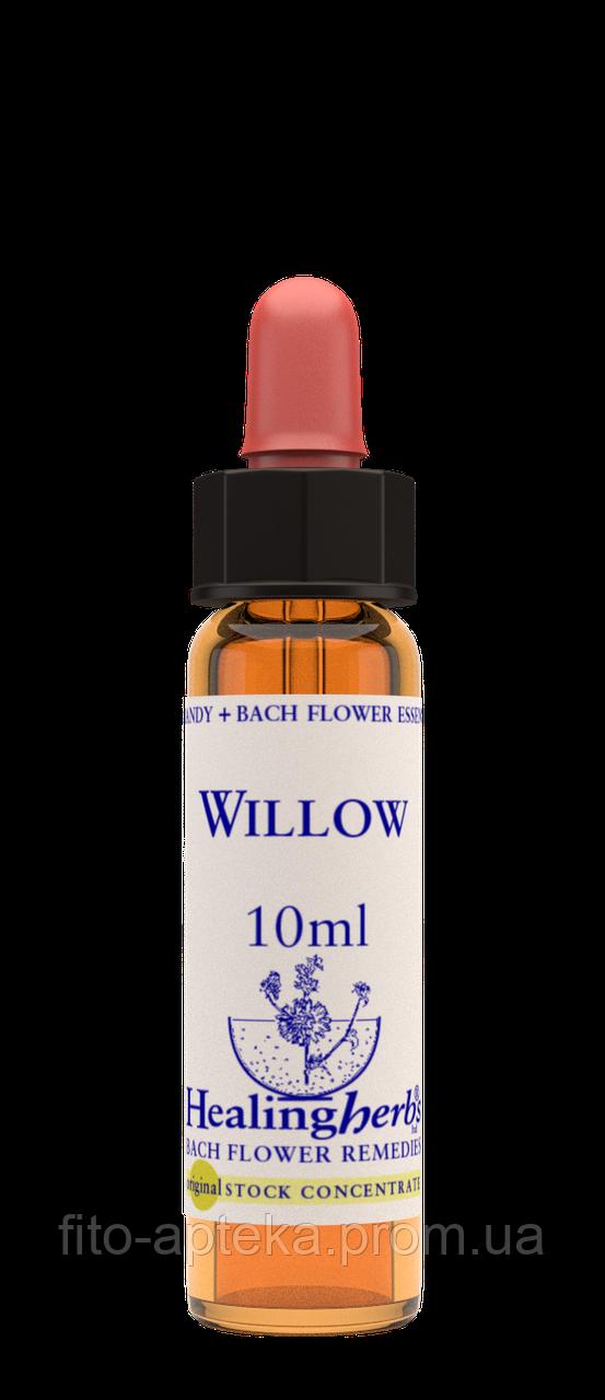 Цветы Баха. WILLOW - Ива (№ 38) Healing Herbs
