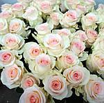 Посадка и выращивание роз