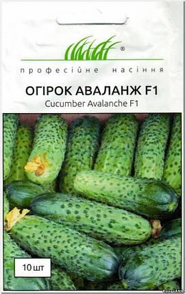 Аваланж F1 семена огурца, 10 семян — партенокарпический, ранний (37 дней), всесезонный NongWoo Bio, фото 2