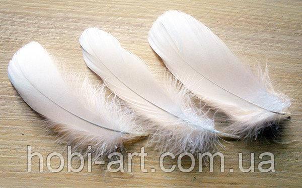 Пір'я  № 37  біле  12-19 см (571600)