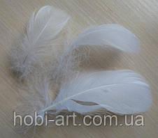 Пір'я № 03 біле 5-15 см (3661)