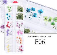 Сухоцветы для дизайна ногтей 06