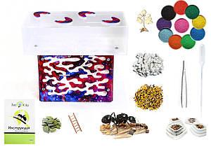 Муравьиная ферма Прометей Star Комплект для новичка + гипс.прослойка, муравьи, корм, декор