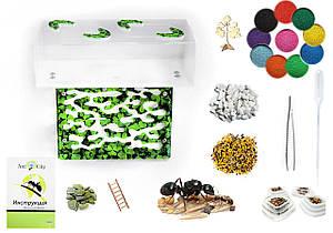Комплект для новичка Муравьиная ферма Прометей Green + гипс.прослойка, муравьи, корм, декор