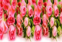 """Алмазная мозаика """"Розовые розы"""",  без рамки"""