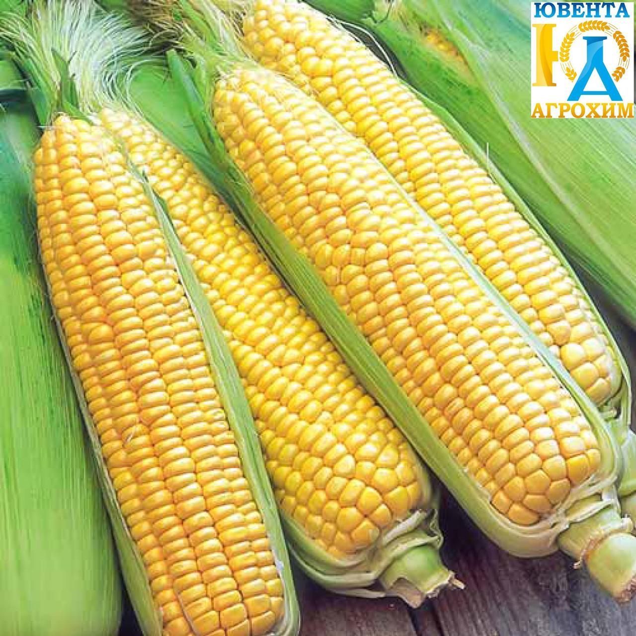 Насіння кукурузи РАМ 3153