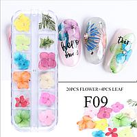 Сухоцветы для дизайна ногтей 09
