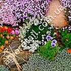 Цветочная смесь Рокарий 0.5 г, фото 2