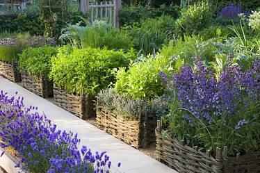 Аптека на городі: які лікарські трави збирати і сушити