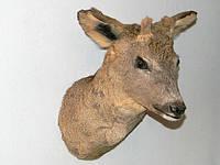 Чучело головы косули, фото 1