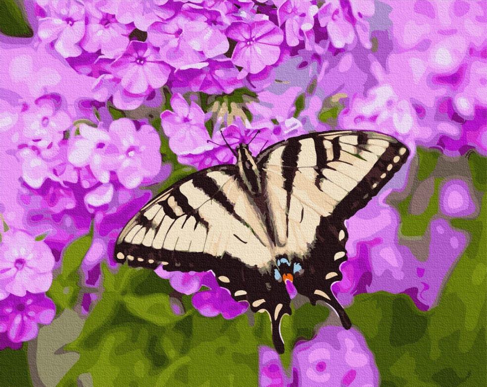Картина рисование по номерам Бабочка в цветах BRM27423 40х50 см Цветы, букеты, натюрморты набор для росписи