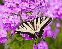 Картина рисование по номерам Бабочка в цветах BRM27423 40х50 см Цветы, букеты, натюрморты набор для росписи, фото 1