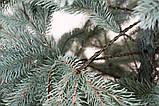 Искусственная ёлка Ковалевская голубая 2.10 метра, фото 4