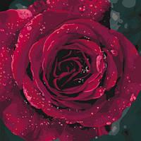 """Картина по номерам """"Роза"""", Идейка, картины по номерам,рисование по номерам,живопись по номерам,раскраски с"""