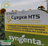 Сузука Suzuka HTS (Круизер) - семена подсолнечника (сульфо, экстенсивный, A-F). Syngenta