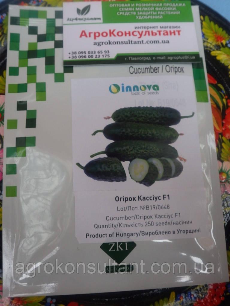 Семена огурца  Кассиус F1 / Cassius F1 (Innova Seeds), 250 семян — партенокарпический, ранний