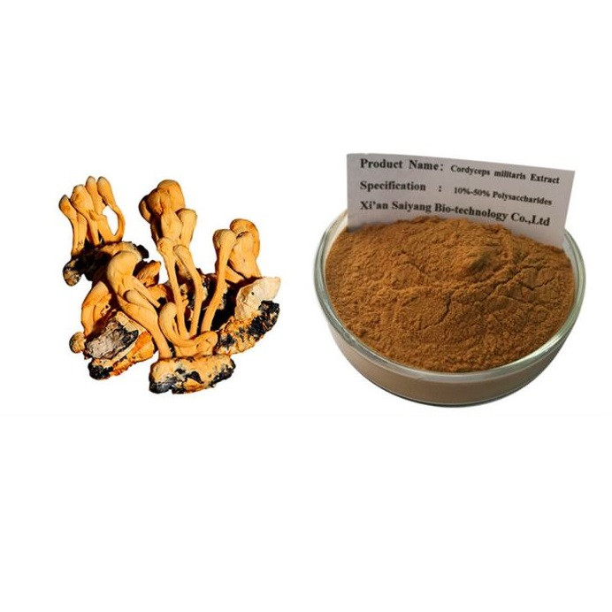 Экстракт Кордицепса, Cordyceps, Китайского Порошок 1 кг