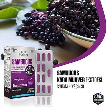 Бузина черная иммунный усилитель - Sambucus Nigra. ZADE VITAL