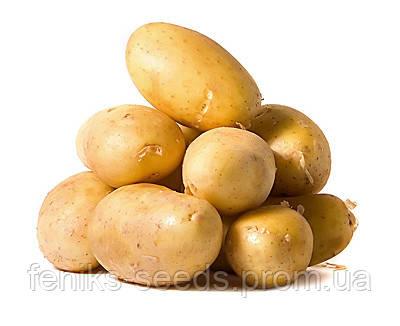 Картофель белый семена