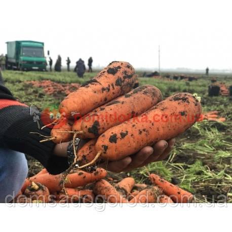 Морковь БОЛИВАР F1 Clause 500 000 шт ( 1.6 - 2.0 )
