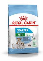 Сухий корм Royal Canin Mini Starter для цуценят в період відлучення (1 кг)