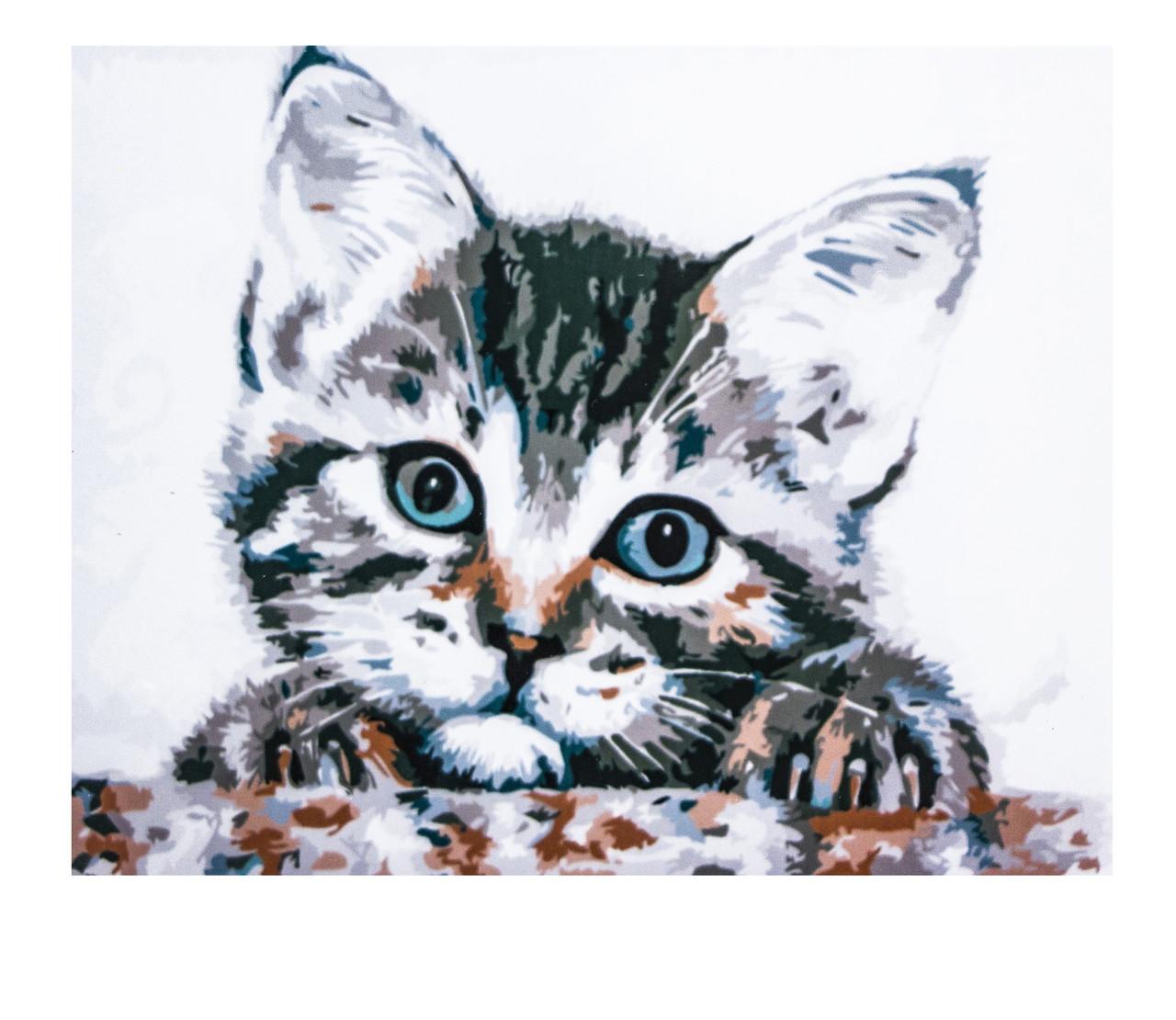 Картина по номерам Котёнок, размер 40х50