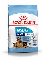 Повнораціонний сухий корм Royal Canin Maxi Starter для сук крупних порід і цуценят до 2 місяців (15 кг)