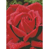 Алмазная вышивка Идейка Душистая роза 30 х 40 (AM6100, На подрамнике)