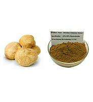 Экстракт Hericium Erinaceus / Органический Натуральный Гриб Гривы Льва Порошок 1 кг