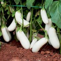 Семена баклажана Аретуза F1 (100с), фото 1
