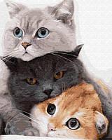 Картины по номерам Котики муркотики 40х50 см арт BS34826