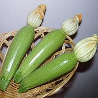 Семена кабачка Мостра F1 (2500 с)