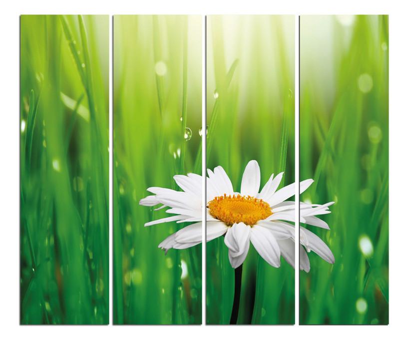 """Картина на стекле """"Ромашка белая"""" модульная"""