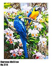 Картина по номерам Попугаи Ара