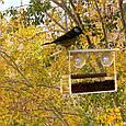 Кормушка для птиц с присосками на окно акриловая Лоджия, фото 6