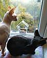 Кормушка для птиц на окно на присосках акриловая Теремок, фото 5