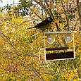 Кормушка для птиц на окно в коробке подарочной с присосками Лоджия, фото 8
