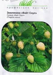 ТМ Професійне насіння Земляника Вайт Соул 0,1г