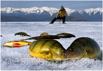Ящик для зимней рыбалки Крутой рыбак, элитная серия, СУПЕР КАЧЕСТВО, фото 3