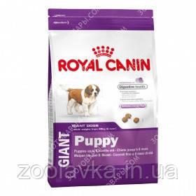 Royal Canin (Роял Канин) Giant Puppy 17кг