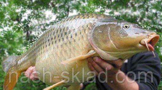 Сигнализатор поклевки Golden Catch ultra, супер улов, фото 2