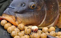 Бойлы Carp Catchers 35 шт. клюква и кальмар, рыбацкая прикормка, супер улов, фото 2