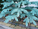 """Елка """"Премиум""""  искусственная литая голубая, пышная густая, 180 см, с подставкой, в коробке, фото 8"""