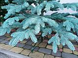 """Елка """"Премиум""""  искусственная литая голубая, пышная густая, 210 см, с подставкой, в коробке, фото 8"""
