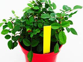 Етикетки-кілочки для рослин PET-R кольорові 1,6 х 10 см, 500 шт - жовті, фото 3