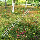 Трава газонная мавританский газон Цветочный рай 400 г, фото 3