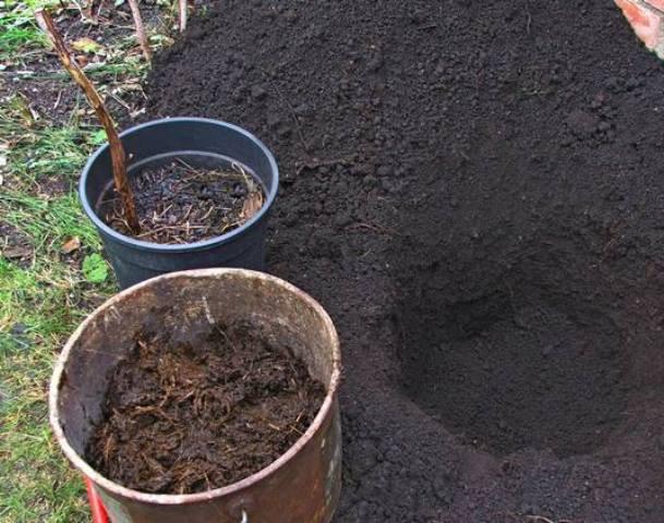 почва для малины, садить малину, саженцы малины