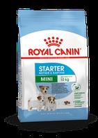 Royal Canin MINI STARTER для для кормящих сук и щенков мелких пород 1кг